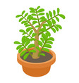 crassula succulent plant icon cartoon style vector image vector image