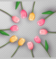 Pink 3d tulip flower circle on isolated background