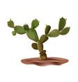 realistic desert cactus prickly pear opuntia vector image vector image