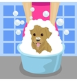 pet groomer washing dog with soap foam vector image