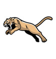 Jumping cougar mascot vector image