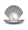 Pearl in shell for fashion vector image vector image