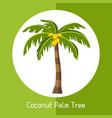 Coconut palm tree of exotic tropical vector image