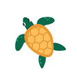 cute green turtle with shell isolated on white vector image