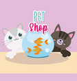 pet shop cats with fish in glass bowl cartoon vector image vector image