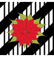 poinsettia on black stripes vector image vector image