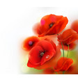 red poppy flower background vector image vector image
