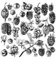 set of hand drawn berries vector image vector image