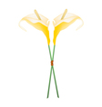 Yellow Anthurium Flowers or Flamingo Flowers vector image vector image