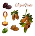 argan oil splash argan tree nuts cosmetic plant vector image