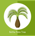 bottle palm tree of exotic tropical vector image vector image