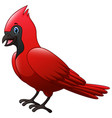 cute a cardinal bird cartoon vector image vector image