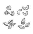 nuts almond cashew hazelnut