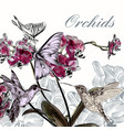beautiful background with orchid flowers vector image