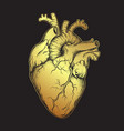 human heart gold line art and dotwork vector image
