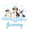 dogs in soap foam vector image