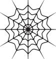 Paukova mreza vector image