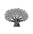tree with leaves nature concept decorative vector image