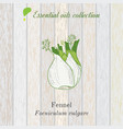 pure essential oil collection fennel wooden vector image vector image
