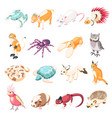 exotic pets isometric icons vector image