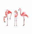 exotic pink flamingo birds set vector image