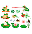 frogs with water lily leaves and flowers reed vector image