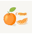 Hand drawn orange vector image