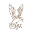 osprey swooping drawing vector image vector image
