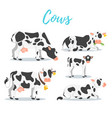 set of cows vector image