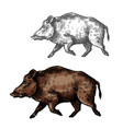 boar aper sketch wild animal vector image
