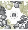 hand drawn sketch walnut design template organic vector image