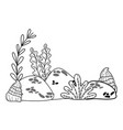 outline exotic seaweed plants with shells and vector image