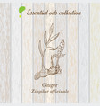 pure essential oil collection ginger wooden vector image vector image