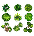 Topview of the different plants vector image vector image