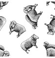 pattern with sheep vector image