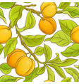 apricot seamless pattern vector image
