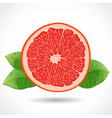 Fresh ripe piece of grapefruit isolated on white vector image vector image