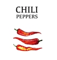 Red chili pepper isolated poster on white vector image