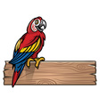 red macaw bird vector image vector image