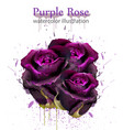 watercolor roses beautiful detailed floral vector image vector image