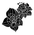 flowers narcissus in black and white style vector image vector image