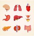 human internal organs anatomy vector image