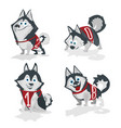 husky dog with numbers 2018 isolated on white vector image vector image
