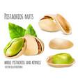 pistachios vector image