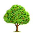 apple tree with vector image vector image