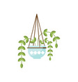 epipremnum house plant indoor flower in pot vector image vector image