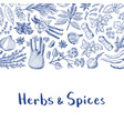 hand drawn herbs and spices background with vector image vector image
