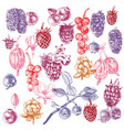 set of hand drawn berries vector image vector image