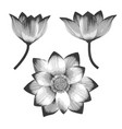 a set realistic lotus flowers vector image