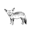 hand drawn big-eared fox vector image vector image